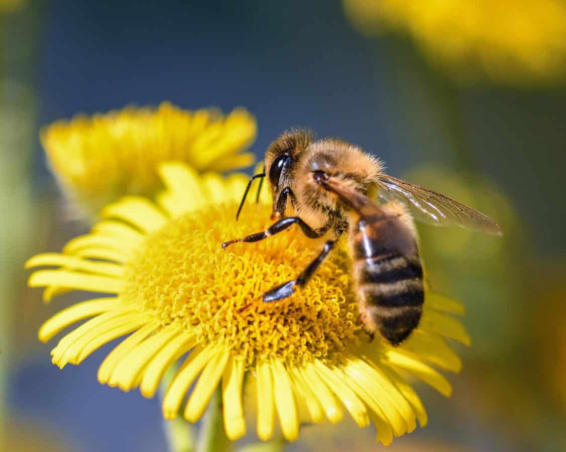 Protect our pollinators !!!!